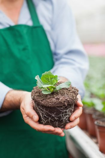 Garden center worker holding out plant