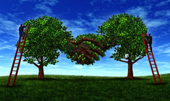 Building business trust and growing a financial partnership through an agreement as two growing trees merging together in a hand shake shape with  businessmen on ladders working together for success.