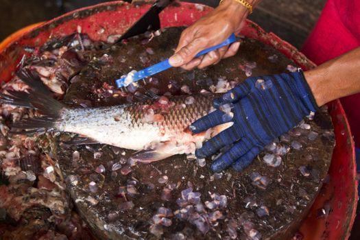 fresh fish in local market