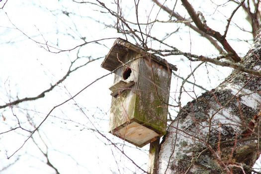 Old birdhouse hanging on a birch