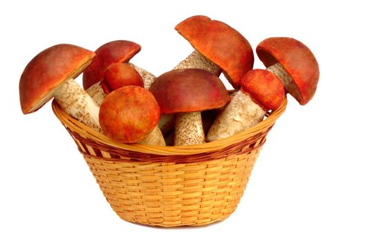 Strong white mushrooms in a wicker basket. Presented on a white background.