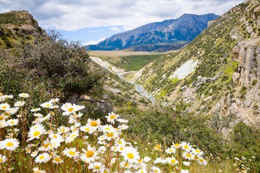 New Zealand scenic landscape
