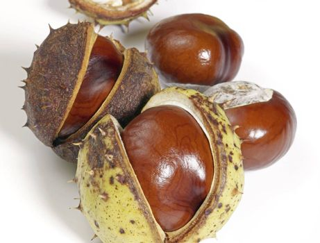 some horse chestnuts in white back