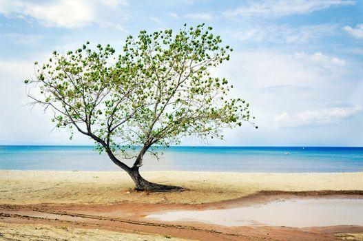 Single tree at the beach