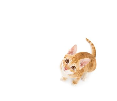 small cat looking up