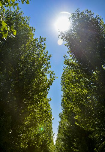 Green trees with sunshine2