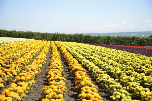 Row of colorful flowers with sunshine9