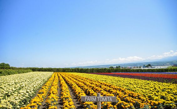 Row of colorful flowers with sunshine5