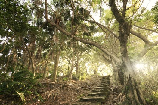 Forest pathway with stairs