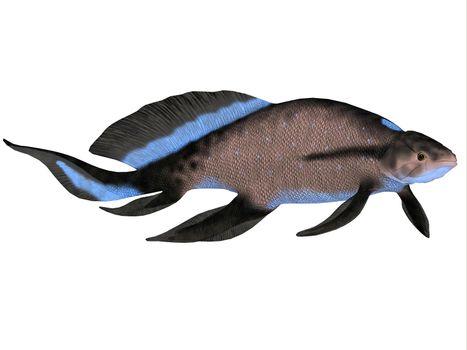 Scaumenacia Fish on White
