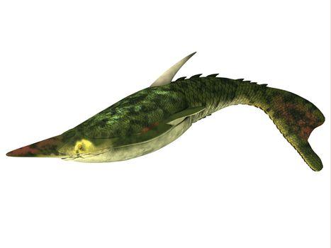 Pteraspis Fish on White