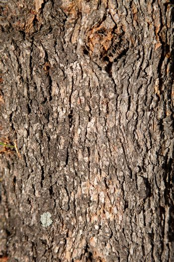 old tree texture background pattern