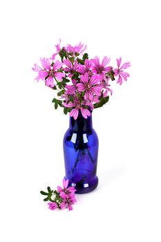 wild violet flowers in blue bottle
