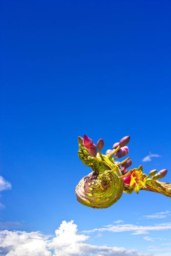 The bouquet of Oroxylum indicum in the head of Naga shape, one of thai vegetable and medicinal properties.