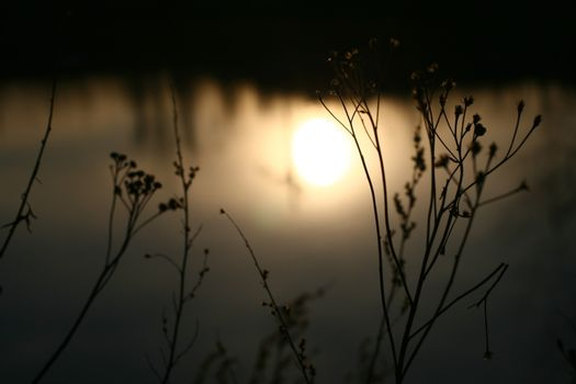 beautiful sunset with grass background
