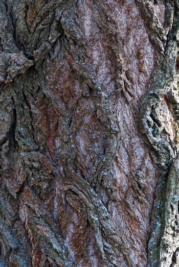 bark of an old gnarled tree in the forest detail
