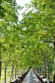 Tree lined rural lane