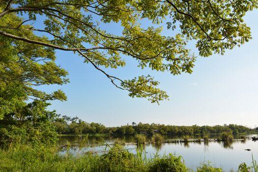 Lake with wood
