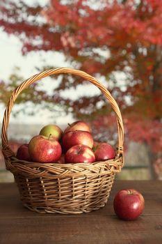 Basket of freshly picked apples on table