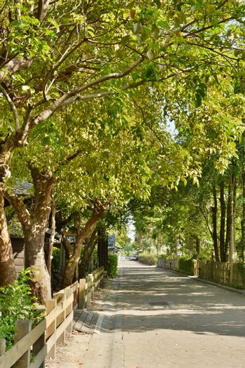Street road with tree
