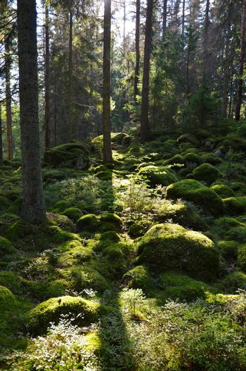 Green Forest in backlighting