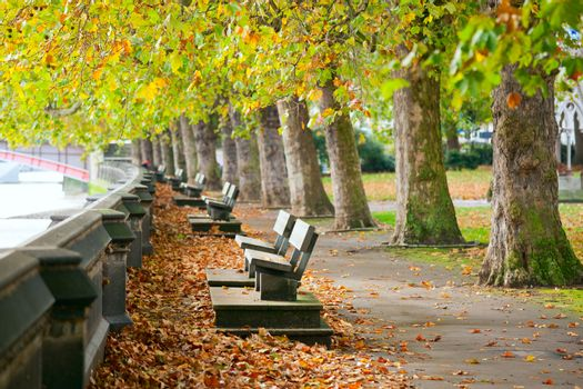Benches on Thames Embankment