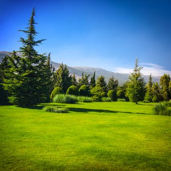 Beautiful landscape, fresh fir trees forest, green grass field, scenery valley in the mountains, clear blue sky, summer traveling concept