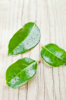 three green wet leaves