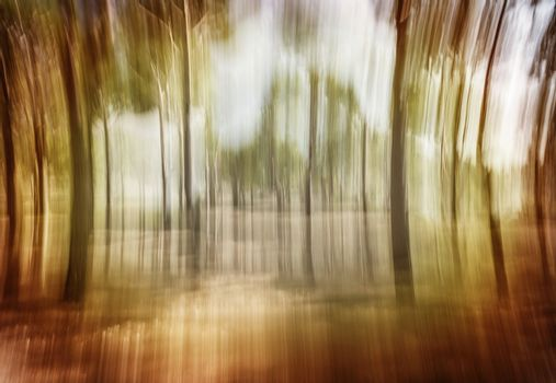 Soft focus photo of forest