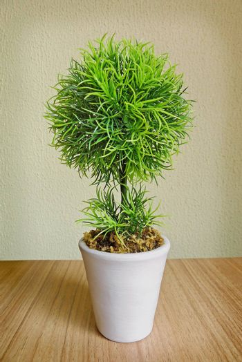 Small tree in a white pot