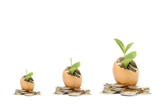 Money tree growing from the coins inside egg.  Money financial concept