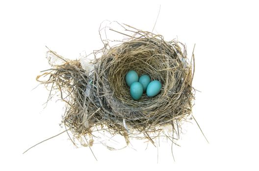 Robins nest with 4 eggs in it. Isolated on a white background