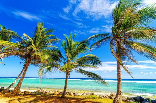 Palm trees on turquoise sea on the coast of San Andres y Providencia, Colombia