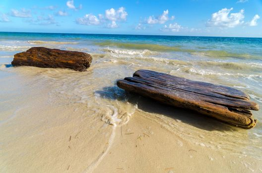 Driftwood washing up on shore of a tropical Caribbean beach