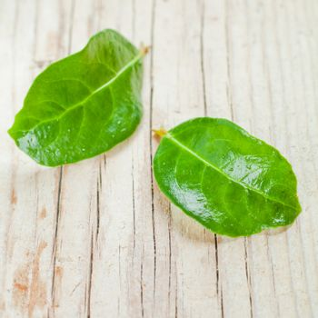 two green wet leaves