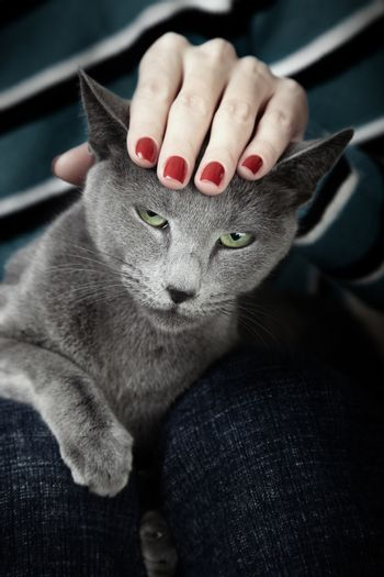 Portrait of the angry cat with human hand on the head