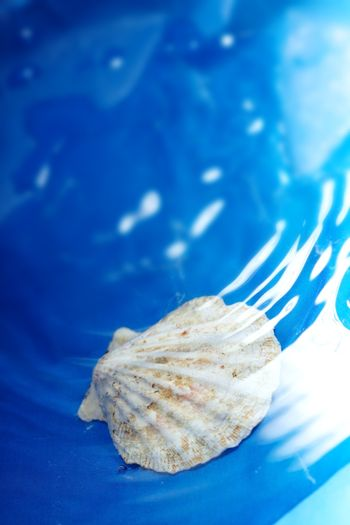 Close-up photo of the seashell under the blue water with ripples