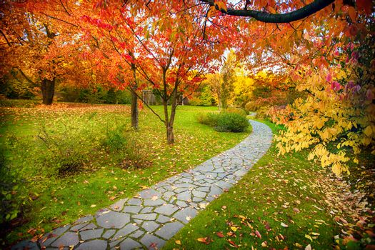autumn pathway in the park