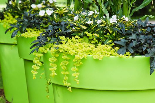 Large plant pots with flowers in the garden, close-up