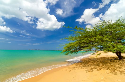 Deserted tropical beach in Pusheo in La Guajira, Colombia with a single solitary tree