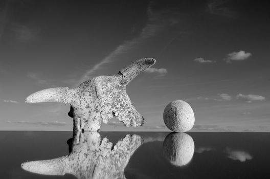 cow cranium and stone concept on mirror