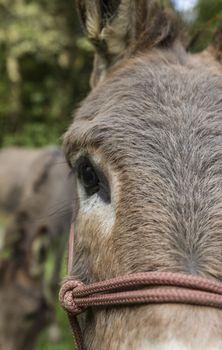 detail shot of brown donkey outdoors. dark eye