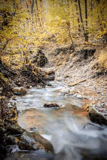 creek in forest in autumn