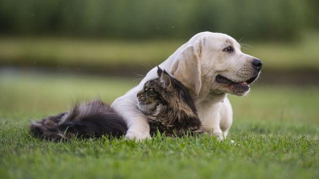 Puppy and tabby cat