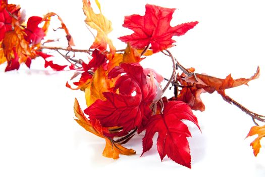 A lot of autumn leaves on a white background