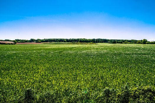 Countryside field in natural surroundings