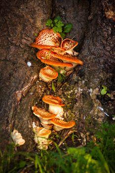 Fairytale mushrooms