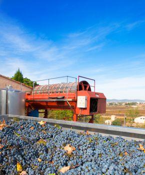 cabernet sauvignon wine grapes and round press