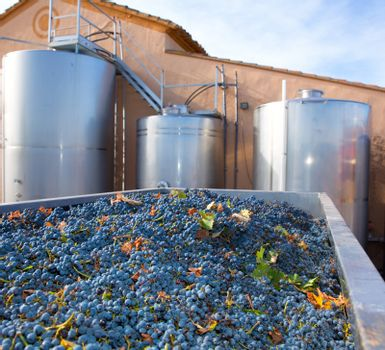 cabernet sauvignon winemaking with grapes and tanks