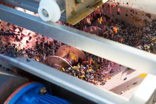 corkscrew crusher destemmer vinemaking with grapes